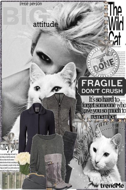Back to basic.Cat