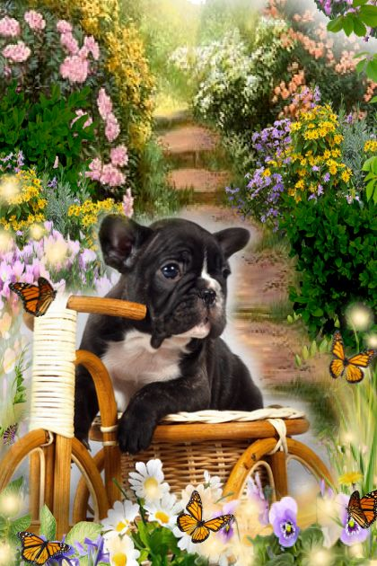 Puppy and his bicycle!