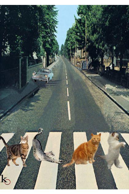 """ Tabby Road """