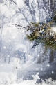 Winter Season - Winter Beauty