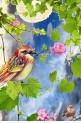beauty of a bird