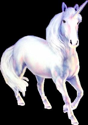 Unicorn Jednorog Admir Djozovic Trendme Net