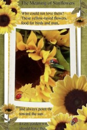 The Meaning of Sunflowers