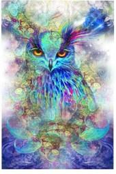 Dream Owl
