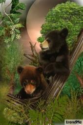 Brothers Bears!