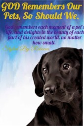 Each Moment Of A Pet