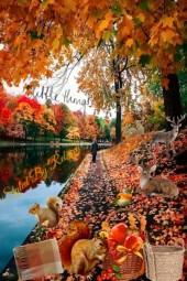 Autumn Picnics At The Park