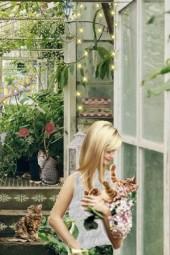 garden full of cats play