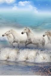 Wild Horses of Camargue