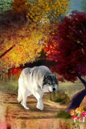A prowling wolf