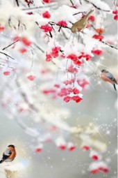 Birds on a rowan-tree