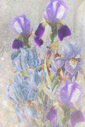 Bees and irises