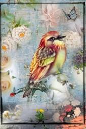 A summer bird