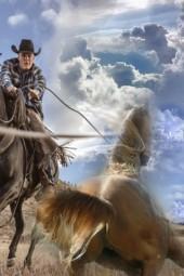 Agile horse