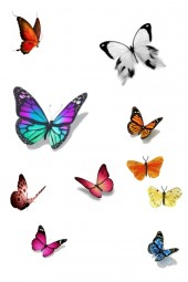 Butterfly's Everywhere