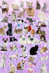 temporada de gatis