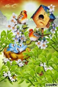 Songful Birds In Spring