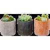 растения - Plants -