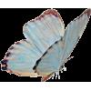 бабочка - 動物 -