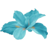цветок - Plants -