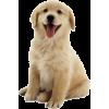 собака - Animals -