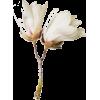 цветы - Plants -
