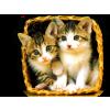 životinje - Animals -