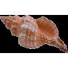 školjke - Items -