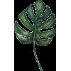 020 - Rastline -