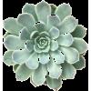 030 - Rośliny -