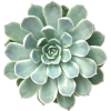 030 - Plants -