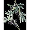 03684 - Plants -