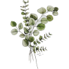 069 - Plants -