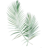 079 - Plants -