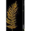123 - Biljke -