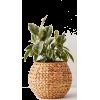 2368 - Rośliny -