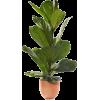 2864 - 植物 -