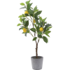 2965 - Plants -