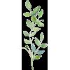 3467 - Plants -