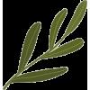 3964 - Plantas -