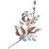 9754 - Plantas -