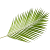 9864 - Plants -