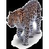Leopard - Animali -