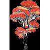 NATURE - Illustrations -