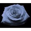 Rose Ruža  - Biljke -