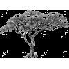 African marula tree - Иллюстрации -