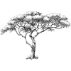 African marula tree - Ilustrationen -