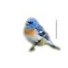 Animal - Nature -