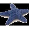 Morska zvijezda - Illustrations -