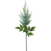 Astilbe Flower - Plantas -